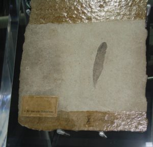 Archaeopteryx feather - complate solnhofen plate